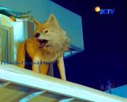 Foto Serigala Ganteng-Ganteng Serigala Episode 69