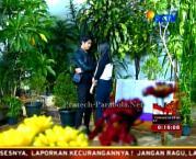 Foto Romantis Aliando dan Prilly GGS Episode 81-9
