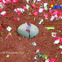 Kumpulan Foto GGS Episode 272 [SCTV] David Hidup Kembali dengan Darah Suci