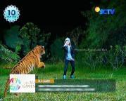 Digo dan Ratu Macan GGS Episode 410