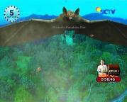 Kelelawar Raksasa GGS Episode 416