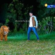 Ratu Macan dan Galang GGS Episode 409