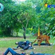 Ratu Macan GGS Episode 413