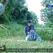 Ricky Harun GGS Episode 407-1