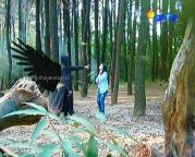 Aliando dan Prilly GGS Episode 456-1