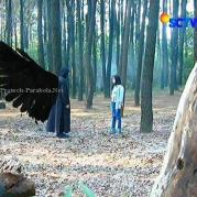 Aliando dan Prilly GGS Episode 456